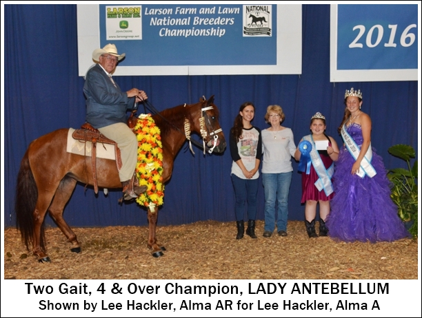 2gait-4year-older-champion2